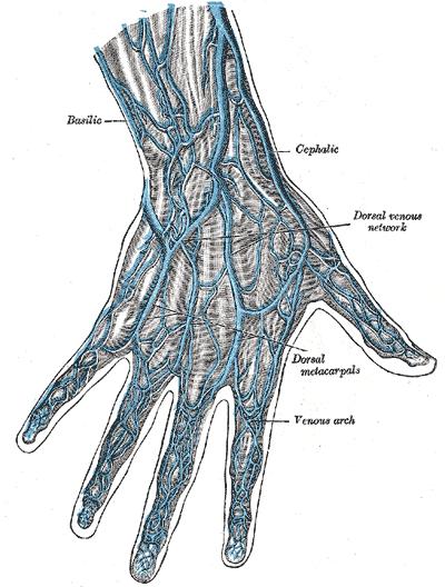 hand veins - http://www.NurseFuel.com
